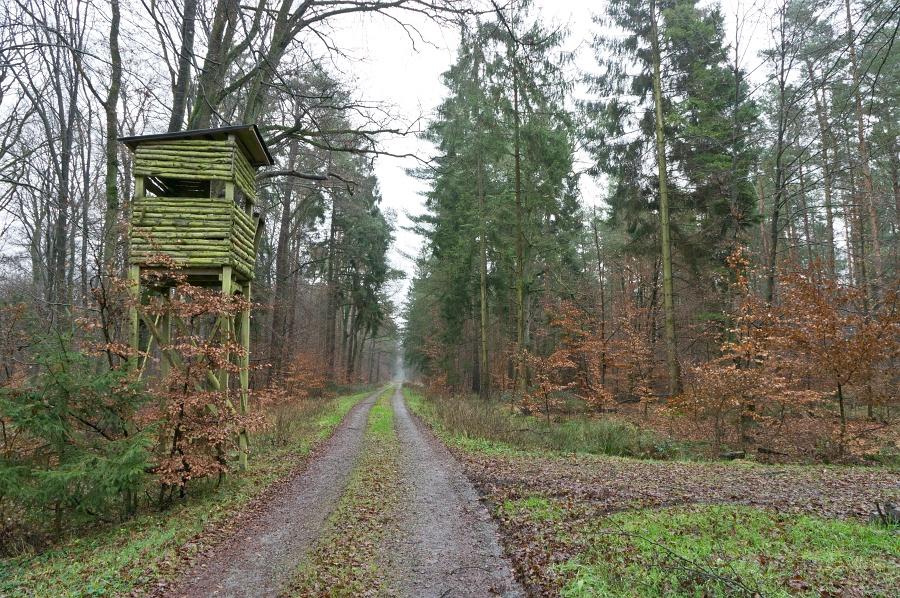 BentheimerWald